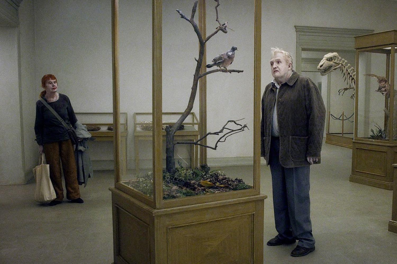 Un-piccione-seduto-su-un-ramo-riflette-sullesistenza-02
